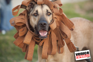 Venice Dog-O-Ween-20